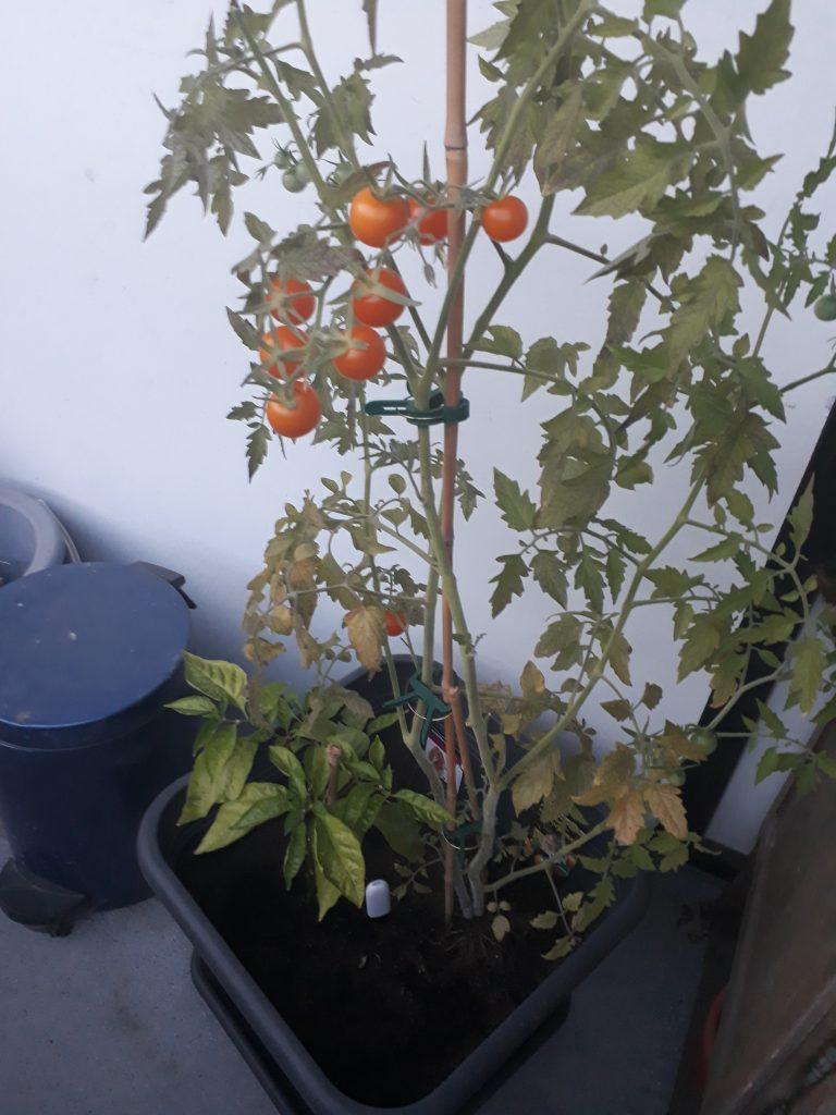 Huahuacaocao Flower Care Smart Monitor